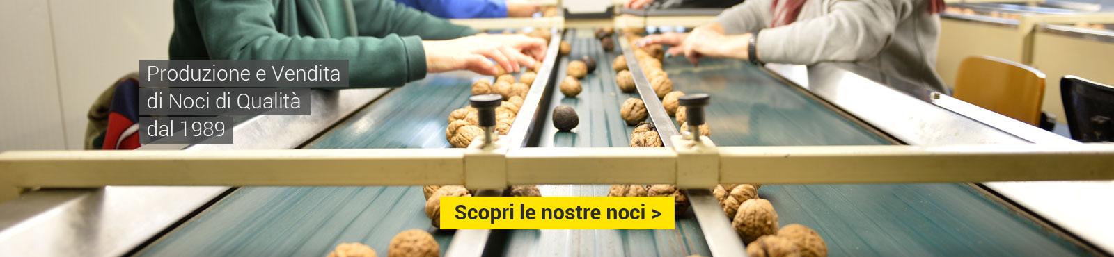 Produzione e vendita di noci di qualità